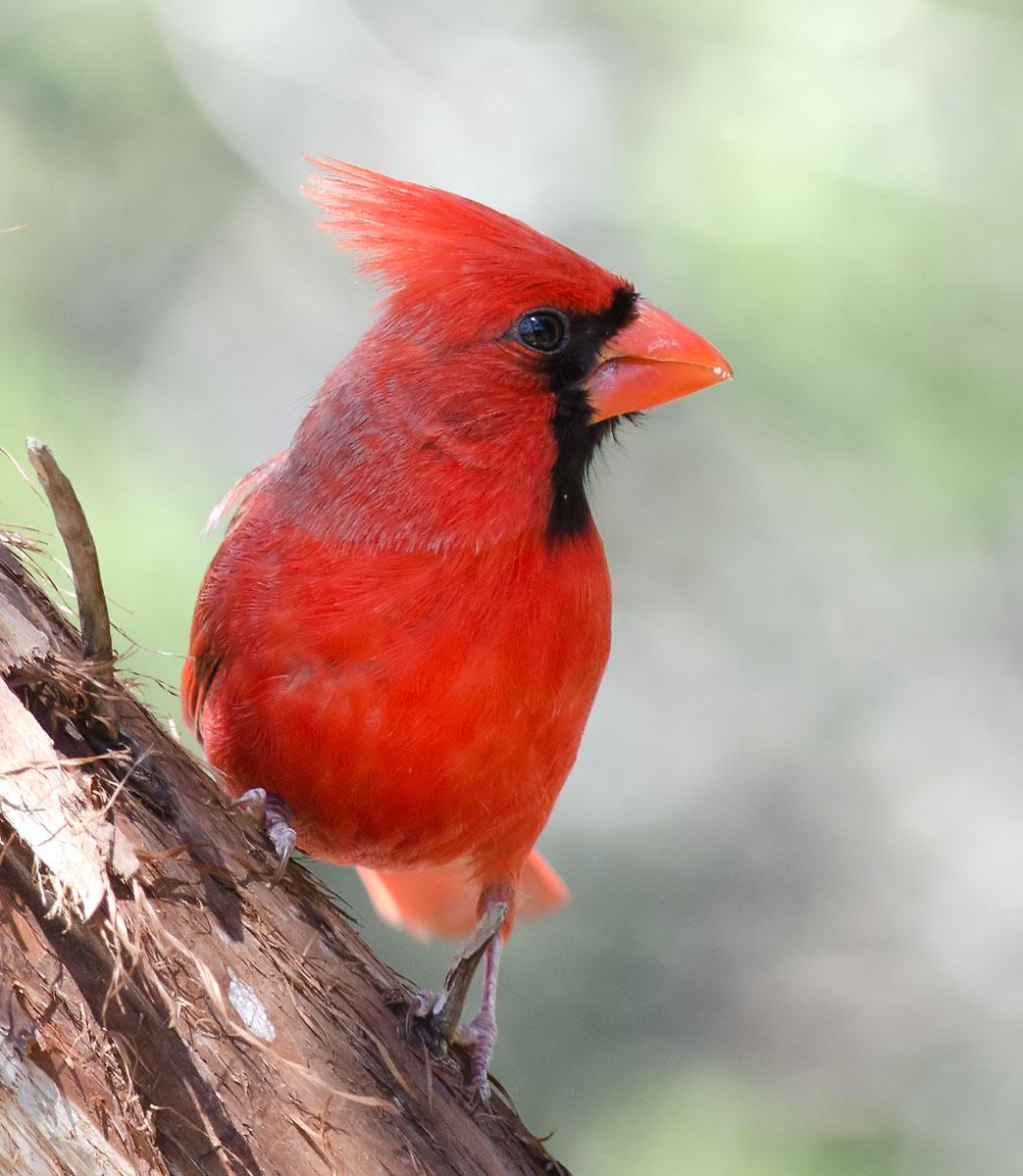 Birds: Texas Hill Country