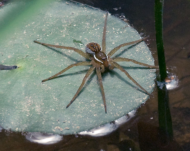 More Spider Photos/Images